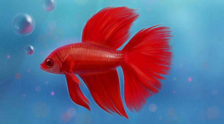 ماهیهای قرمز