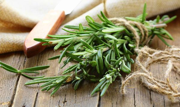 گیاه دارویی رزماری