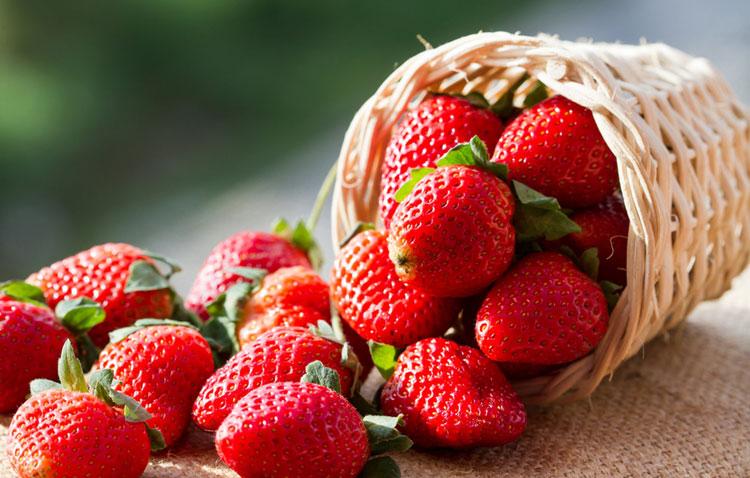 توتفرنگی