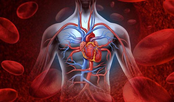 ترویج گردش خون با استفاده از روغن زالو