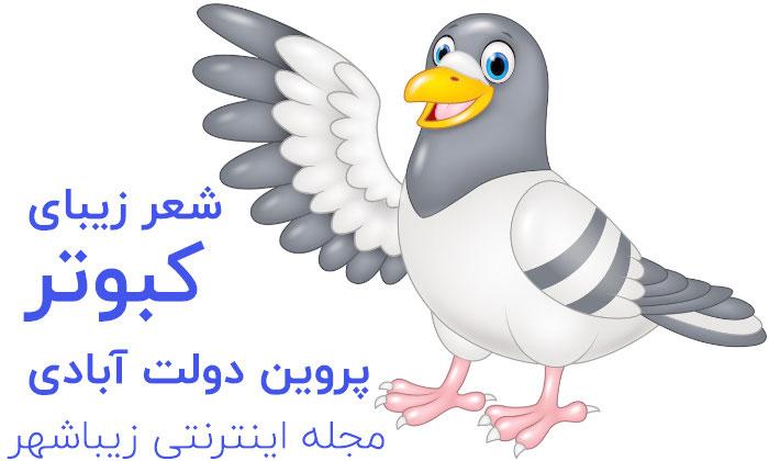 شعر کبوتر
