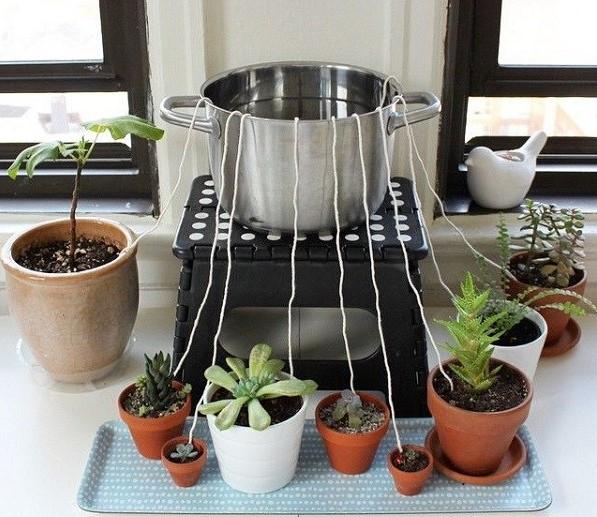 آبیاری گیاهان آپارتمانی به هنگام سفر