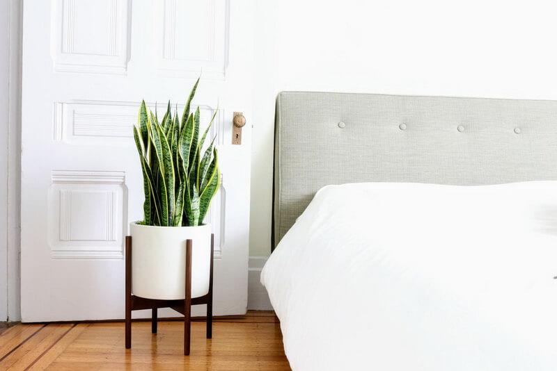 گلهای مخصوص اتاق خواب