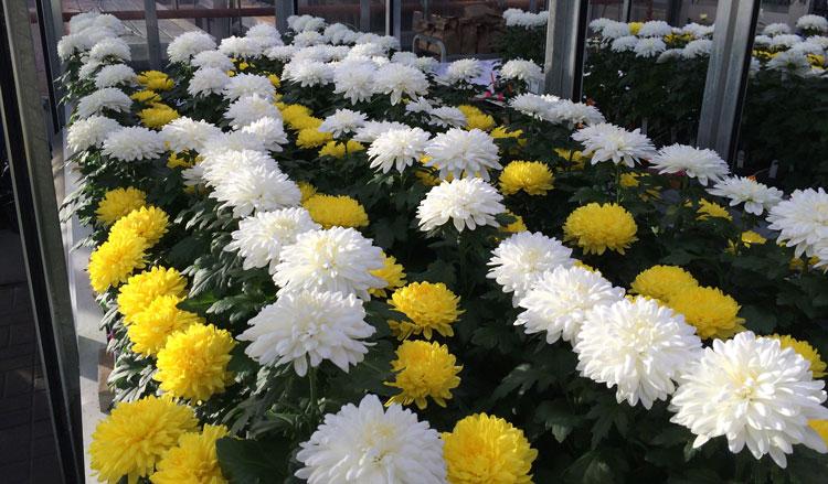 انواع گیاهان مناسب برای بالکن