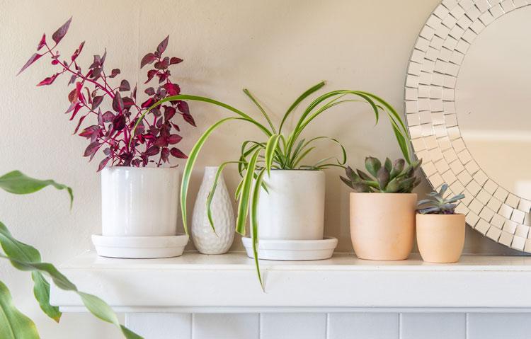 اصول نگهداری گلهای آپارتمانی