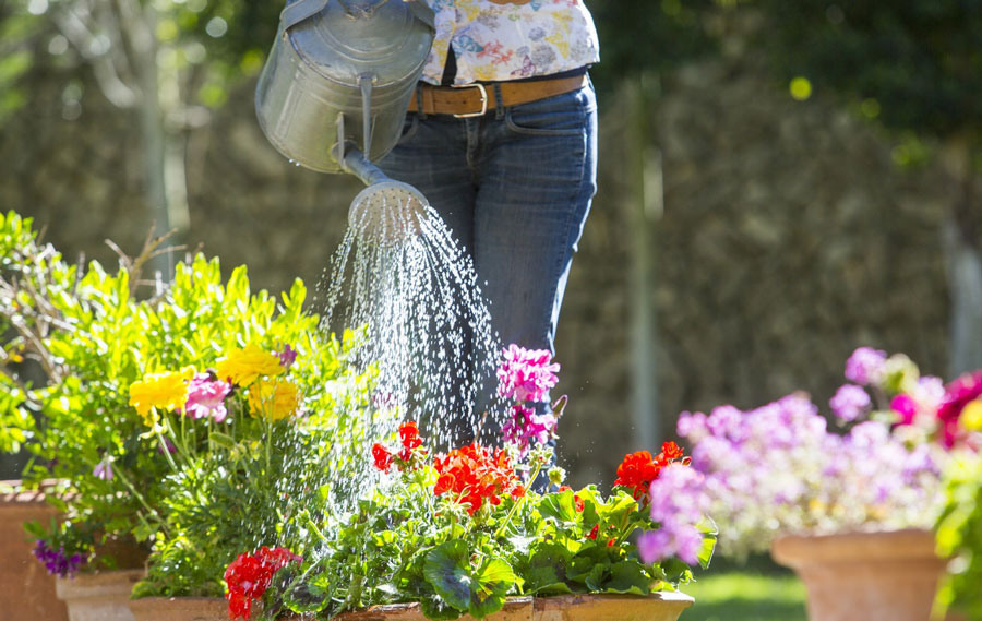 روشهای نگهداری گلهای آپارتمانی